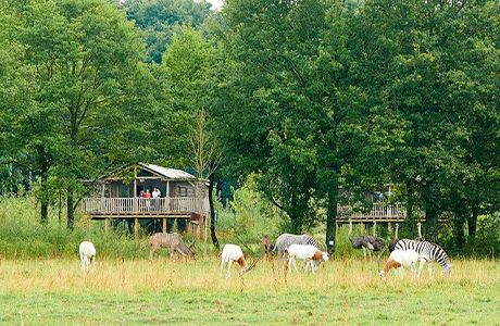 Discover the Lodges of PAL
