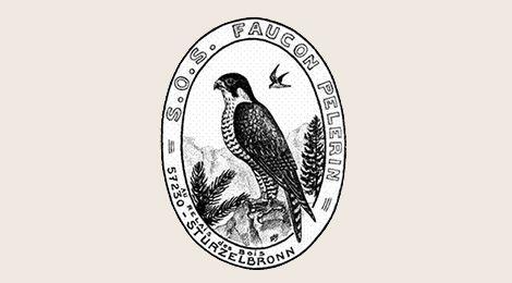 SOS Peregrine Falcon